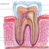 Zubní průkaz dítěte